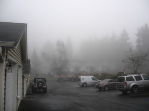 My neighborhood in the fog yesterday.