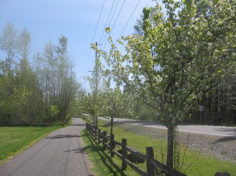 The beginning of the trail, between the road and the ball fields, with crabapple trees.