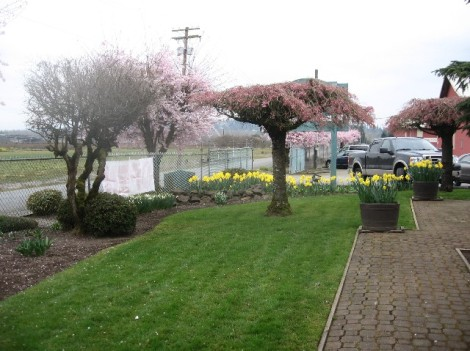 And another view, with weeping cherry trees.